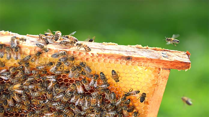 Beekeeping Business Image