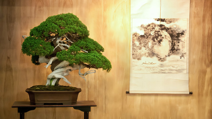 Bonsai Tree Business Image
