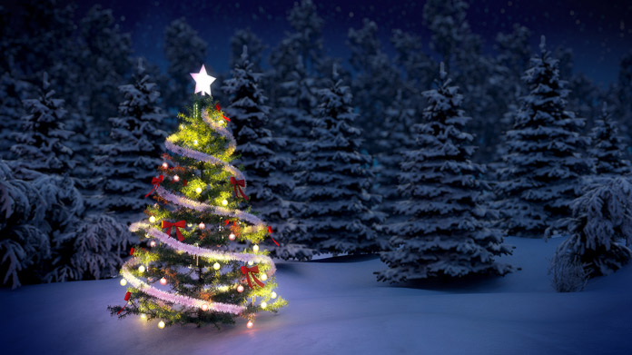christmas tree farm image - How To Start A Christmas Tree Farm