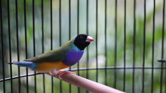 Commercial Aviary Image