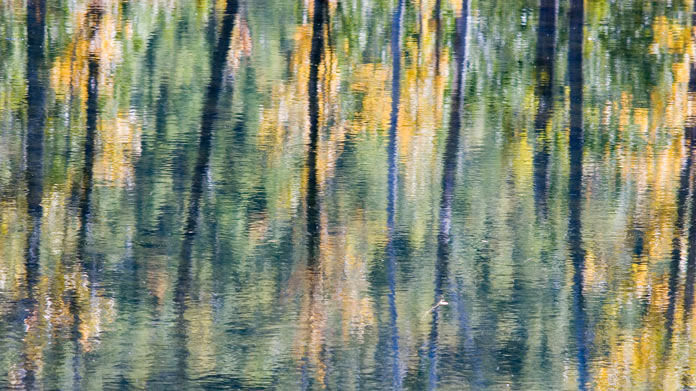 Painted photo of trees in a pond
