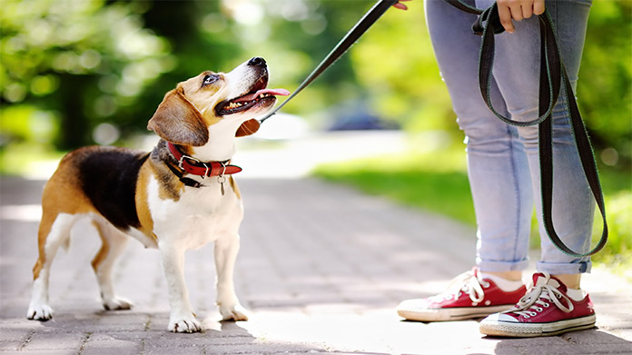 Dog Walking Business Image