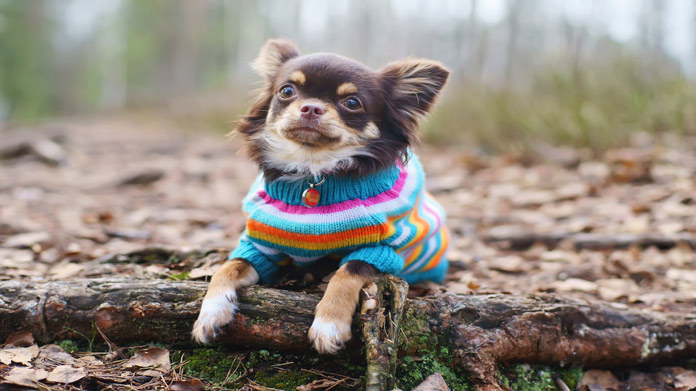 Pet Clothing Store Image