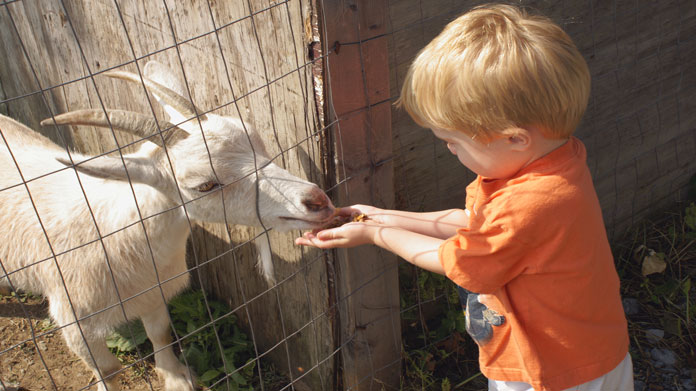 How to Start a Petting Zoo How to Start an LLC