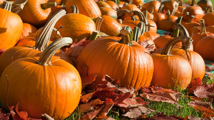 Pumpkin Farm Image