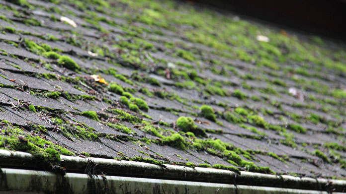 A roof with lots of moss growing on it