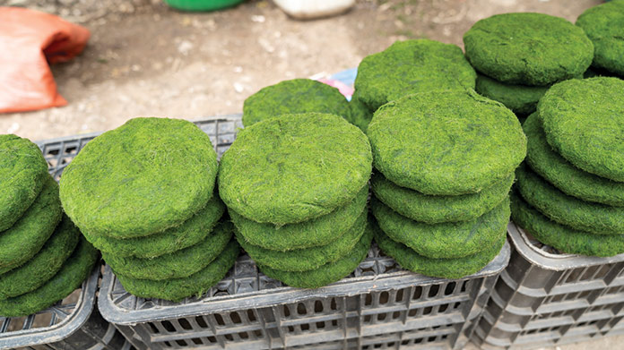 Algae Farm Image