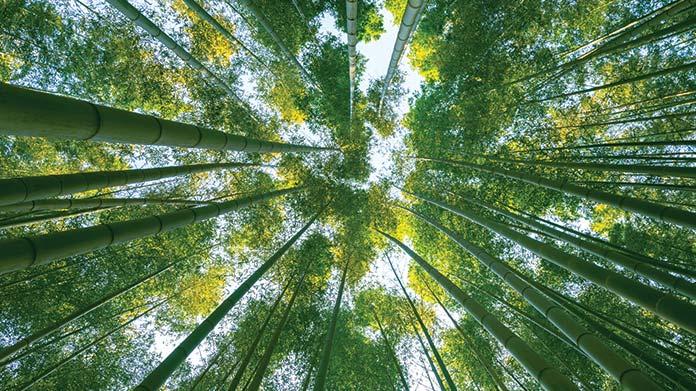 Bamboo Farm Image