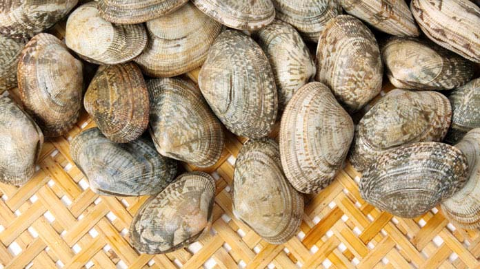 Clamming Business Image