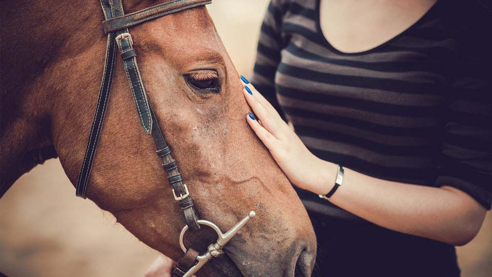 Equine Therapy Business Image