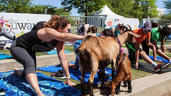 Goat Yoga Business