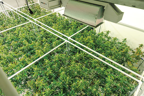 Mobile Grow Operation Business Image