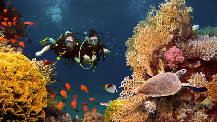 Scuba Diving Business Image