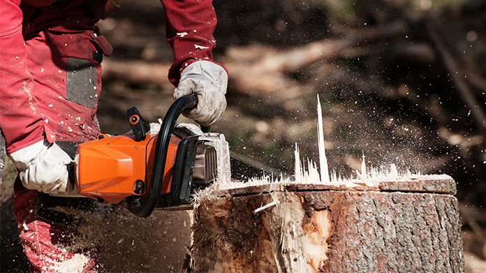 Tree Stump Removal Business Image