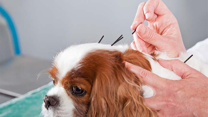 Veterinary Acupuncture Business Image
