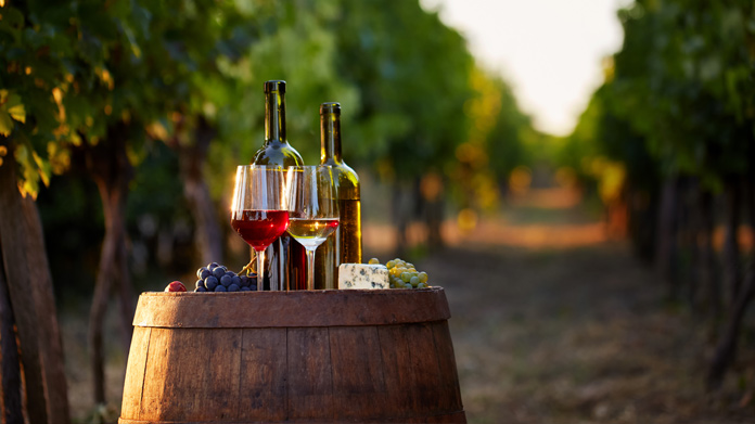 Vineyard Business Image